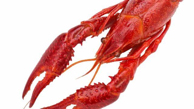 Lobster or Crawfish?
