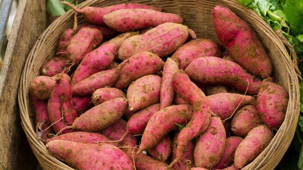 How long do sweet potatoes last once cut